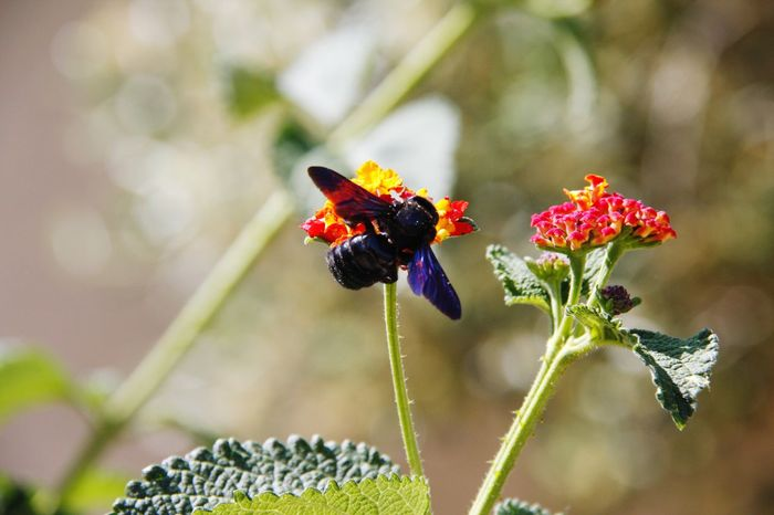 Black Bee Insect Flower Nature Plant Animals In The Wild Animal Wildlife Day Outdoors Focus On Foreground Bee