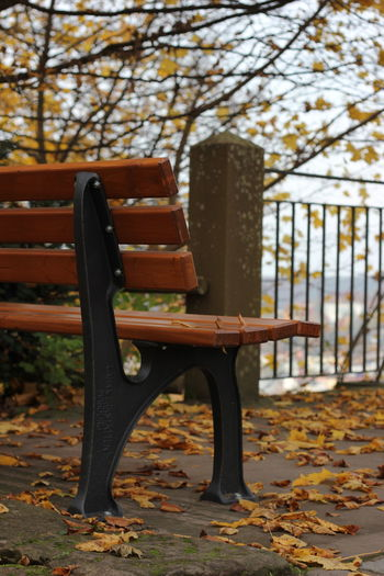 Tree Bench Chair Sitting Outdoors Day No People Nature Autumn Autumn Colors Autumn Leaves Leaves Blätter Träumen Genießen Nature Macro Marburg Germany Tree Yellow YellowLeaf