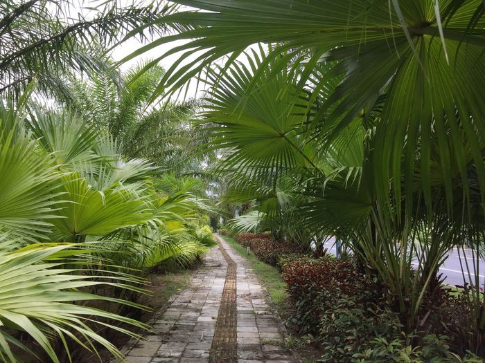 it Nature Green Color Beauty In Nature No People Outdoors Day Palm Tree Scenics