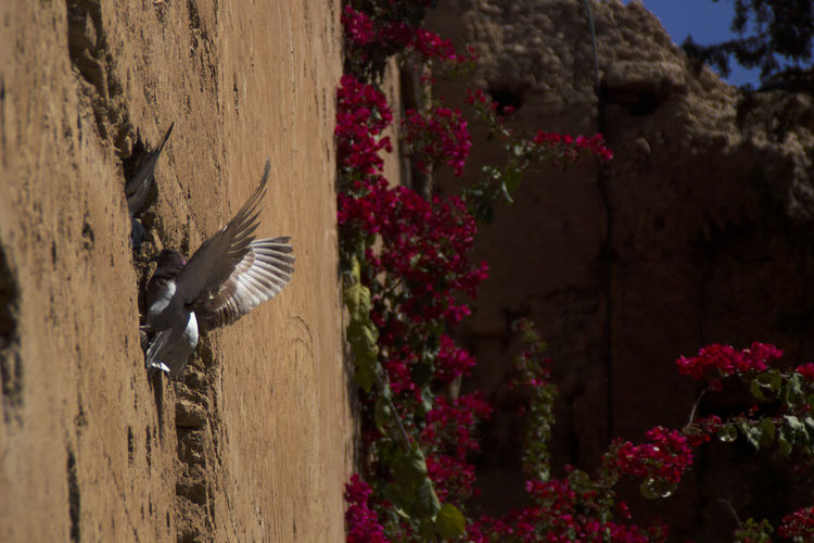 Marrakech Morroco Architecture Bird Different Perspective Travel Traveling EyeEm Best Shots EyeEm Best Edits Animal Themes Animal Animal Wildlife Flying No People Nature Flower Outdoors Motion