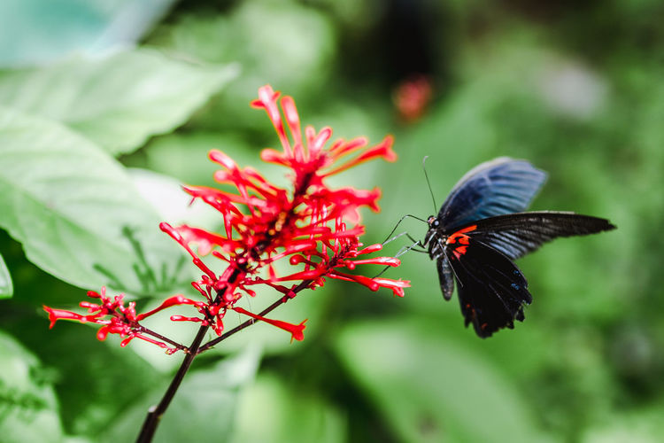 Butterfly. Animal Themes Animal Wildlife Invertebrate Insect One Animal Animal Animals In The Wild Red Animal Wing Plant Close-up Focus On Foreground Beauty In Nature Growth Flower Day Fragility No People Butterfly - Insect Nature Outdoors Pollination Flower Head