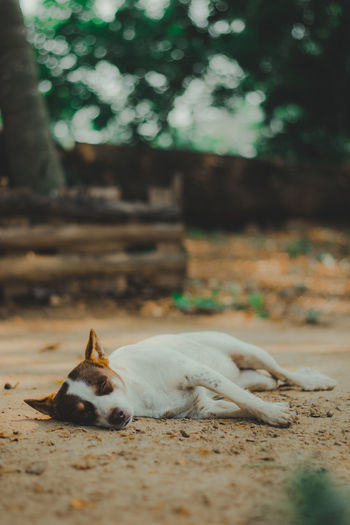 View of a dog resting on land
