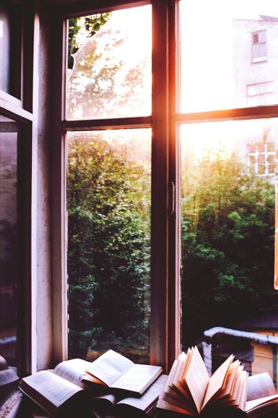 Sunlight Morning Freshness Mood Captures Thoughtful Happyday Window Tree Book Home Interior Window Sill