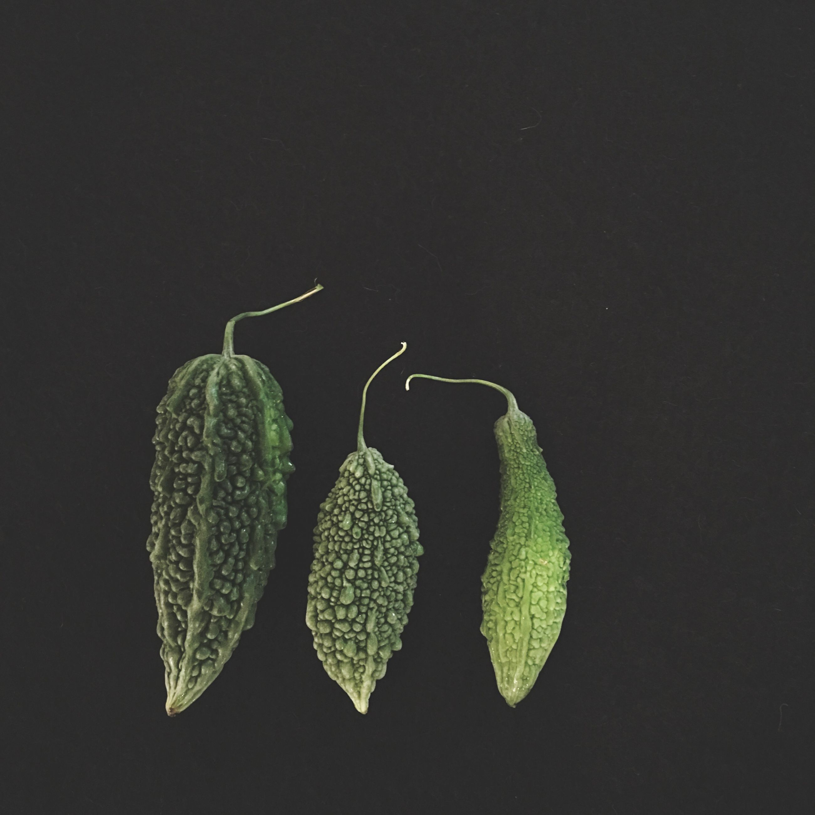 close-up, botany, growth, dark, night, plant, green color, studio shot, flower, springtime, black background, freshness, blossom, nature, dew, beauty in nature, no people, in bloom, vibrant color, green