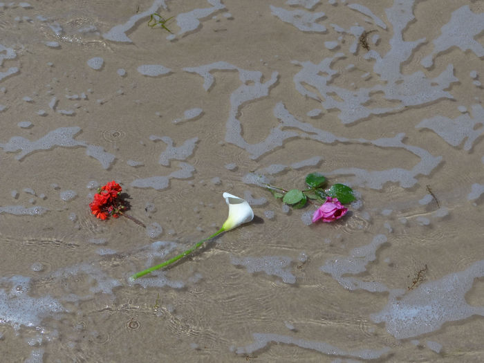 Flowers at sea following the ashes of a WWII veteran laid to rest on Gold beach. Arromanches Beach Beauty In Nature Close-up Day Flower Flowers In The Water Fragility Funeral Funeral Ceremony High Angle View Nature No People Normandy Normandy Beach Outdoors Sand Water