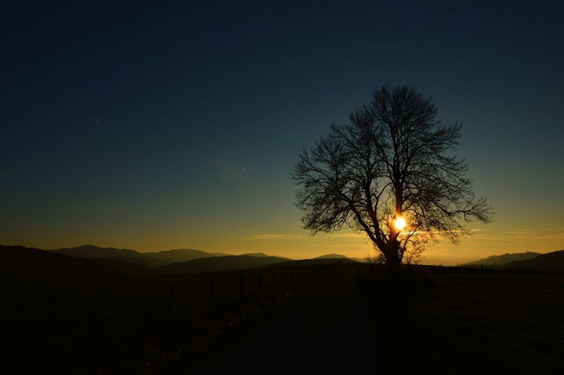 Sunset Light Tree Silhouette