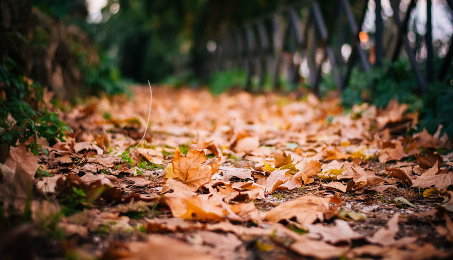 Close-up of autumn leaves fallen on field