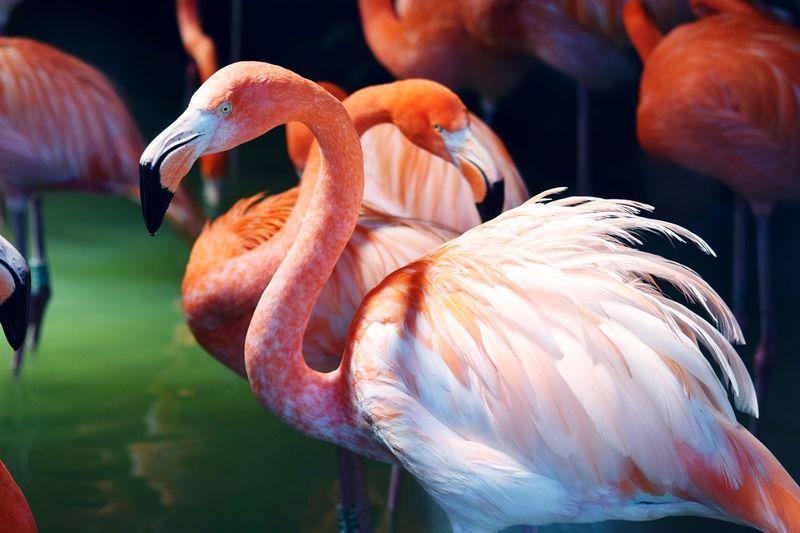 Close-up of flamingoes