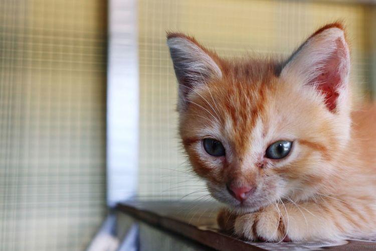 Portrait of ginger cat