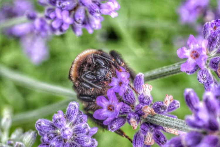 Bee pollinating on purple flower