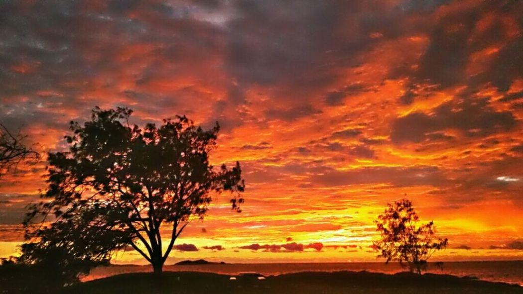 Sunrise Redsunrises RedClouds  Sillhouette Tree And Sky Tree Silhouette Morning Sky Firstsun