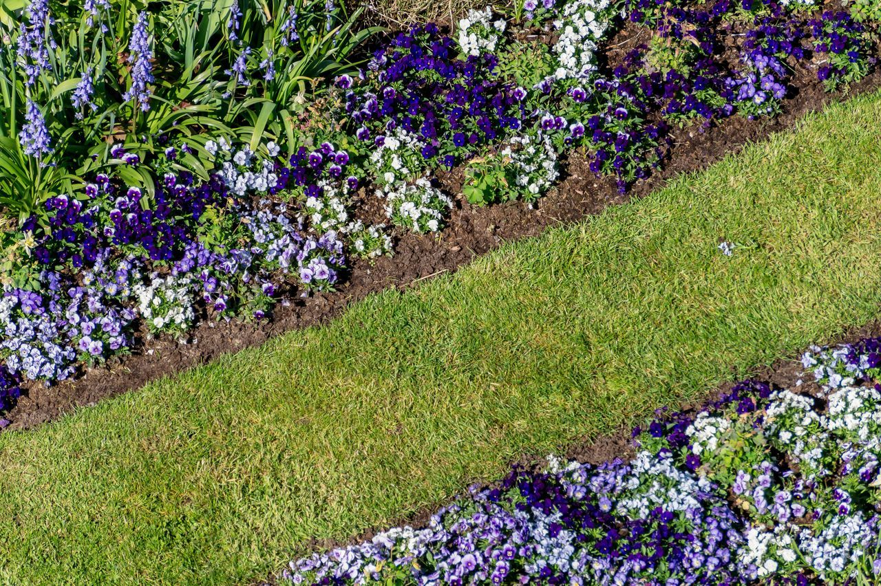 plant, flower, flowering plant, growth, nature, freshness, beauty in nature, grass, day, no people, vulnerability, multi colored, fragility, purple, land, high angle view, green color, field, outdoors, garden, springtime, flowerbed, flower head, gardening, ornamental garden