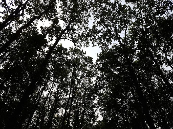 IN A FOREST...