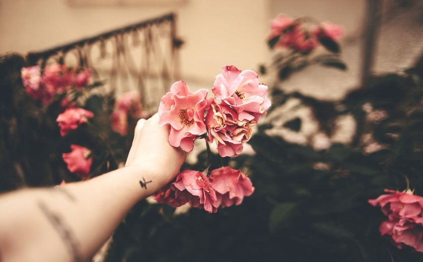 Tattoo EyeEm Selects Art is Everywhere EyeEmNewHere Bokeh Rose - Flower Roses Spine Human Hand Flower Nail Polish City Flower Head Holding Rose - Flower Close-up Blooming In Bloom Pink Nail Polish Blossom