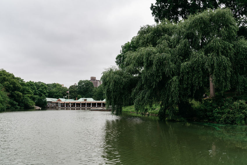 Lake in Central Park a cloudy day of summer Architecture Day Manhattan NYC NYC Street Photography America American Central Park Lake Tree Plant Water Cloud - Sky Waterfront Sky Growth Nature Beauty In Nature Scenics - Nature Green Color Built Structure No People Nautical Vessel River Building Exterior Tranquility Outdoors