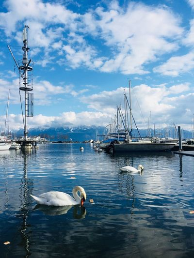 Swan Lake Ouchy, Lausanne No Filter, No Edit, Just Photography No Filter Switzerland Lausanne Clouds Mountains And Sky Mountains Lake Lake Leman Swan Lake Swan Water Nautical Vessel Transportation Cloud - Sky Sky Mode Of Transportation Sea Nature Sailboat Day Reflection Beauty In Nature Outdoors No People Yacht