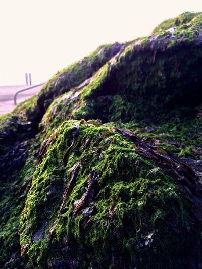 Seaweed Clear