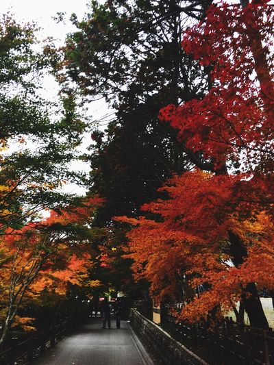 Autumn Tree Change Leaf Nature Growth Beauty In Nature Tranquility Outdoors Branch Real People Scenics Day Men Sky People 紅葉 紅葉シーズン 法多山