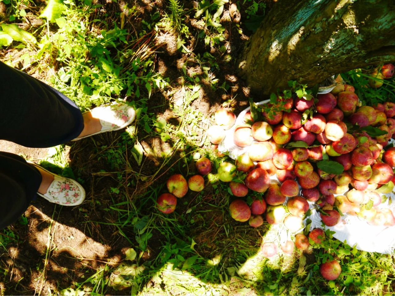 fruit, food and drink, one person, real people, healthy eating, growth, freshness, day, food, high angle view, outdoors, abundance, human body part, low section, nature, healthy lifestyle, human hand, grass, tree, people