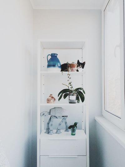 Cat IKEA Plants