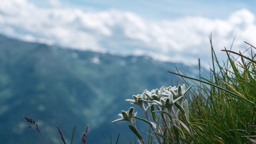 Close-up of plants against mountain