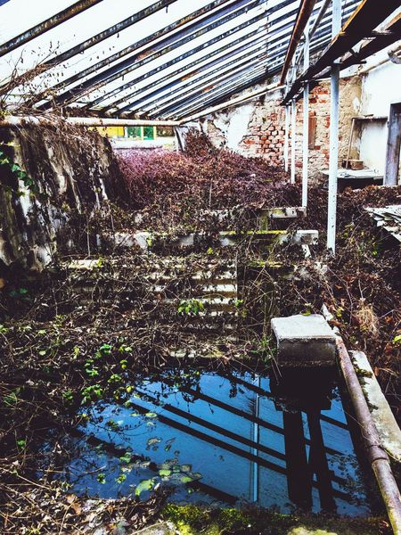 nature takes back old abandoned factory Fairy Garden Forgotten Places  Forgotten Rusty Metal Rusty Things Rusty Building Glasshouse Old Greenhouse Greenhouse Glassroof Glass Roof Old Factory Building Old Factory Nature Taking Over Ivy Reflecting Water Water Reflections Old Fountain Fountain Abandoned Factory Abandoned Buildings Abandoned Places Built Structure Architecture Day No People Plant Outdoors Building Exterior Nature