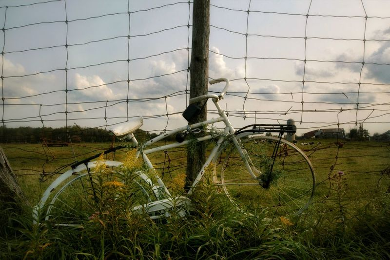 Ghost Bike Bike Fence Grass Weeds Dilapidated Rusty Outdoors Nature Sunny Day Ontario, Canada Field The Great Outdoors - 2018 EyeEm Awards The Traveler - 2018 EyeEm Awards The Still Life Photographer - 2018 EyeEm Awards Summer Road Tripping 10 50 Ways Of Seeing: Gratitude