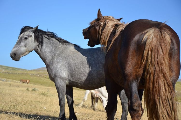 Wild Horses Wild Animal Horse Animal Themes Mammal Domestic Animals Day No People Field Clear Sky Sky Outdoors Togetherness Animals In The Wild Nature