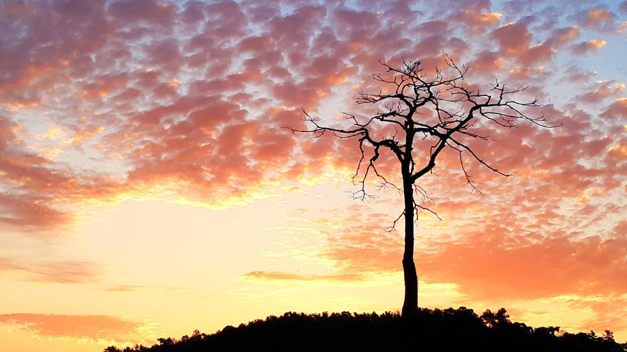 Bare Tree Nature Orange Color Outdoors Silhouette Sky Sunset Tree Tree Trunk EyeEm Diversity
