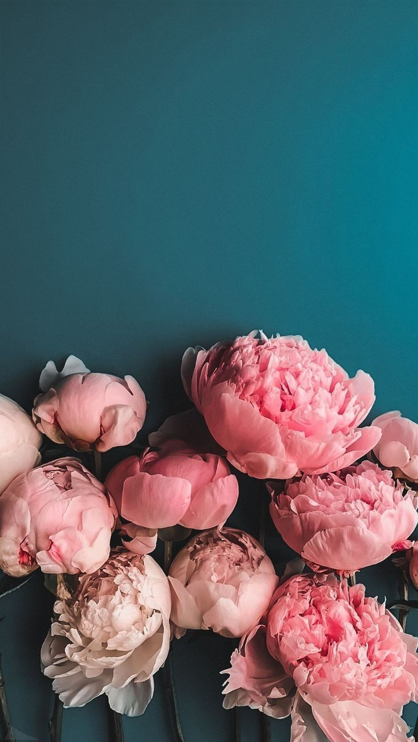 flowering plant, flower, pink color, beauty in nature, plant, freshness, fragility, vulnerability, petal, copy space, close-up, flower head, nature, indoors, inflorescence, studio shot, no people, rose, blue, high angle view, flower arrangement, bouquet, blue background, bunch of flowers