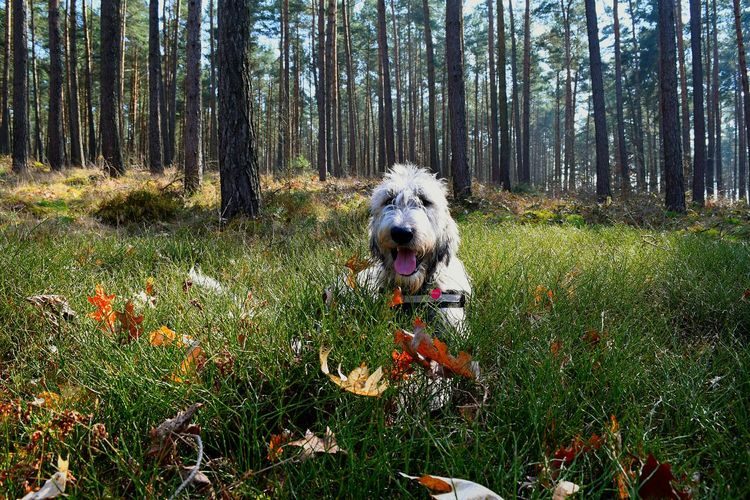 Taking Photos Check This Out Irishwolfhound Altmark 2016 Love To Take Photos ❤ Spring 2016 The Places I've Been Today Dog Of The Day Dog Walking Dogwalk Today Dogs Of EyeEm Love My Dog  Dog❤ Dog Of My Life Cearnaigh Irish Wolfhound How's The Weather Today? Cheese! Dogslife Tree_collection  A Walk In The Woods Blair Witch Project Wood In The Forest