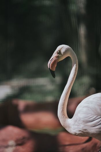 Flamingo in forest