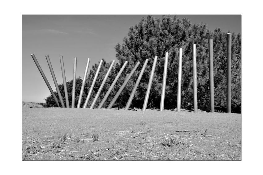 Rising Wave 1 Oyster Bay Regional Park San Leandro,Ca. Stainless Steel Sculpture Bnw_friday_eyeemchallenge Is It Art? Poles 16 Poles Angles All About Angles Swelling Wave Bay Vistas Rising Wave Artist: Roger Berry San Francisco Bay Trail Spectacular Views Nature Bird Watching Wildlife Monochrome Black & White Black And White Photography Black And White Black And White Collection