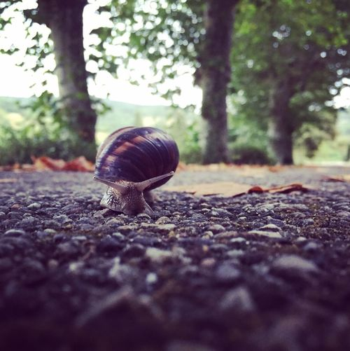 I would rather be a hammer than a snail 🐌🔨🌿 Snail One Animal Animal Themes Snail Animals In The Wild Nature Tree Surface Level Outdoors No People Day Animal Wildlife Gastropod Close-up Slimy