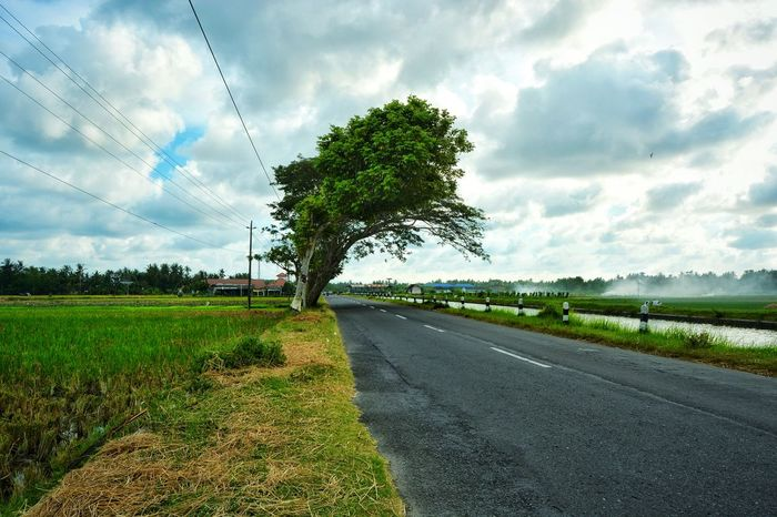 Cloud - Sky Tree Grass Green Color Growth Sky Nature Rural Scene Road The Way Forward No People Scenics Landscape Ruralphotography Wanderlust My Photography Streetphotography Agriculture EyeEmNewHere