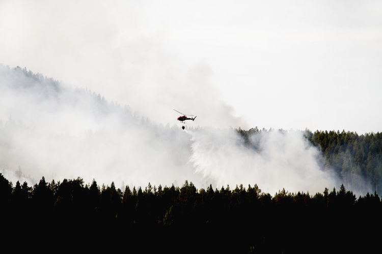 Low angle view of silhouette airplane flying in forest against sky