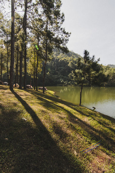 Countryside Forest Lake Lakeshore Maehongson Nature Outdoors Pang Ung Shadow Shadows Thailand Tranquil Scene Trees ปางอุ๋ง แม่ฮ่องสอน