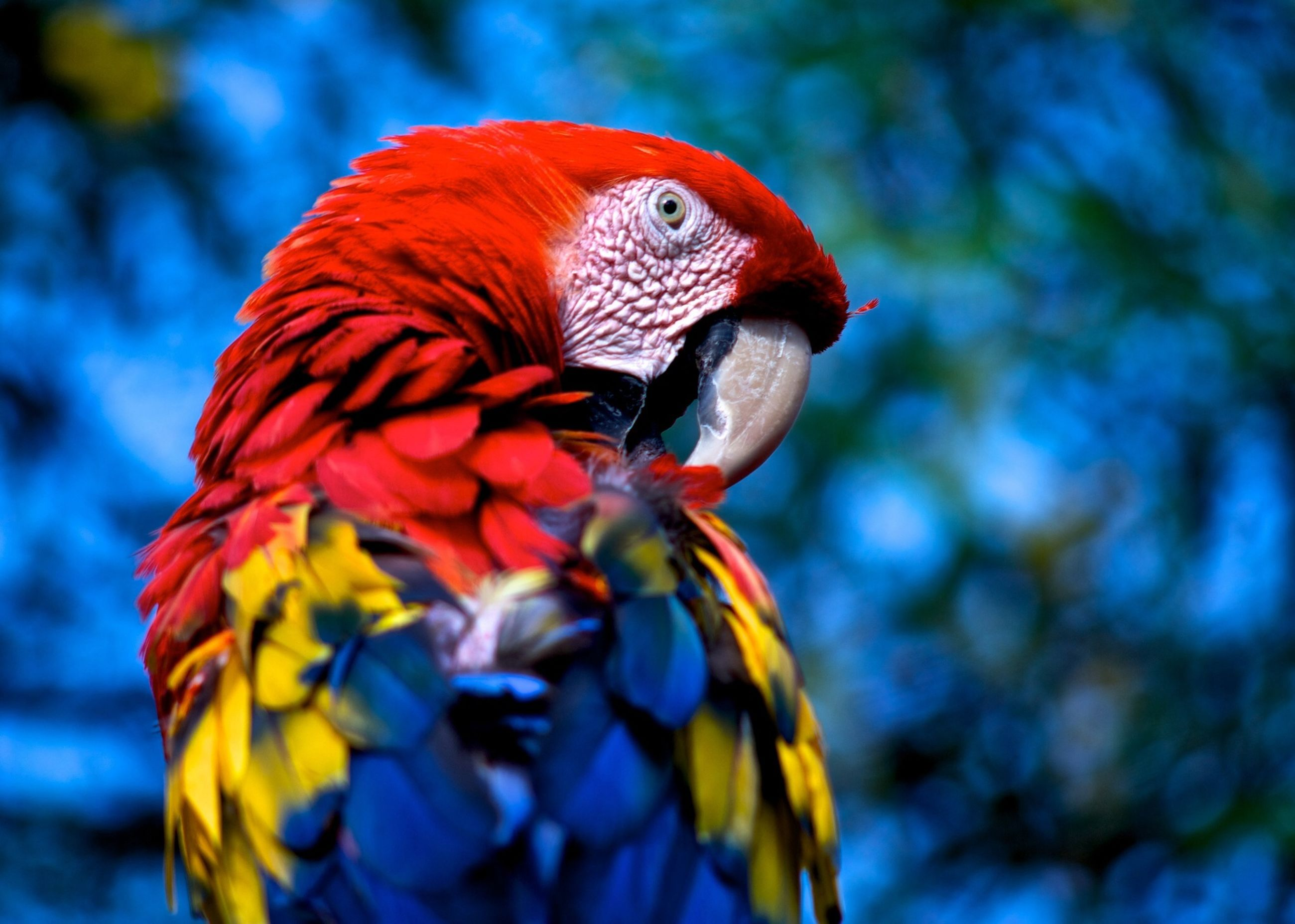 animal themes, animals in the wild, one animal, wildlife, bird, focus on foreground, orange color, beak, close-up, multi colored, beauty in nature, nature, no people, outdoors, day, selective focus, perching, zoology, parrot, side view
