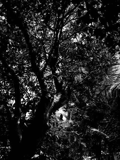 Dark nature. Abstact Backgrounds Beauty In Nature Blackandwhite Branch Day EyeEm Best Shots EyeEm Pampanga Eyeem Philippines Forest Growth Idyllic Low Angle View Nature Nature No People Non-urban Scene Outdoors Scenics ShootTheDay Sky Tranquil Scene Tranquility Tree Tree Trunk