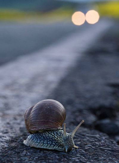 Close-up of snail on road in front of a car