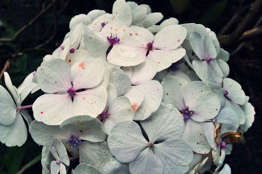 Beauty In Nature Blooming Blossom Botany Close-up Flower Flower Head Fragility Freshness Growth In Bloom Nature Petal Pink Color Springtime White Travels