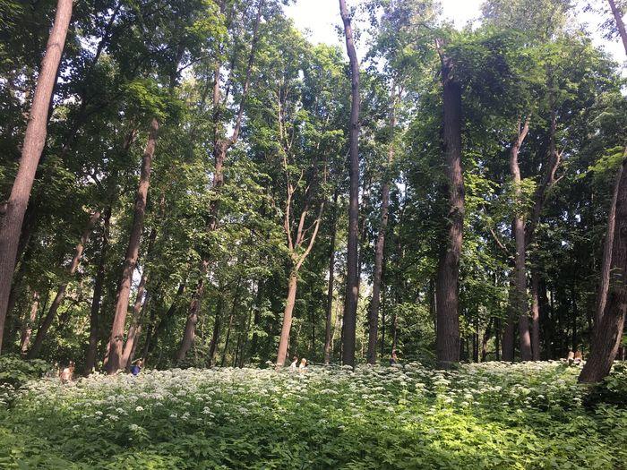 #москва2018#июнь#лето2018🌈#выходные#пруд#паркгорького#шикарнаяпого#отличноенастроение#всемдобра🙏 #moscow2018#june#summer2018🌈#weekend#pond#parkgorkogo#eased #москва2018#июнь#лето2018🌈#выходные#пруд#паркгорького#шикарнаяпого#отличноенастроение#всемдобра🙏 #moscow2018#june#summer2018🌈#weekend#pond#parkgorkogo#eased Plant Tree Growth Land Beauty In Nature Green Color Nature