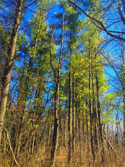 Love the sun hitting these trees. I had to stop and take a shot. Trees Look Up And Thrive Taking Photos Spring