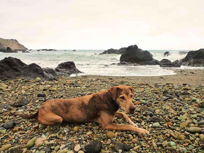 Dog on the beach in Ayampe, Ecuador. Animal Themes Beach Beauty In Nature Day Dog Dog Lovers🐾 Domestic Animals Horizon Over Water Mammal Nature No People One Animal Outdoors Pebble Pebble Beach Pets Rock - Object Sand Scenics Sea Shore Sky Tranquil Scene Water Wild Dogs
