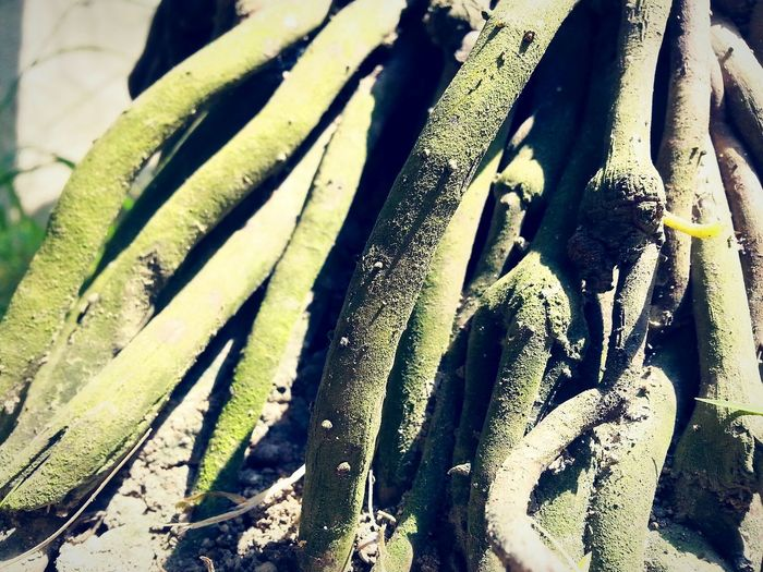 strangling in a uniquely different way... Tree Roots Green EyeEm Nature Lover EyeEmNewHere Unique