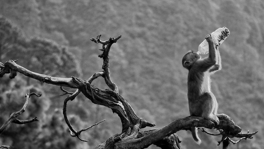 Branch Nature Mammal Outdoors Animal Wildlife Animal Themes No People Day Tree Monkey