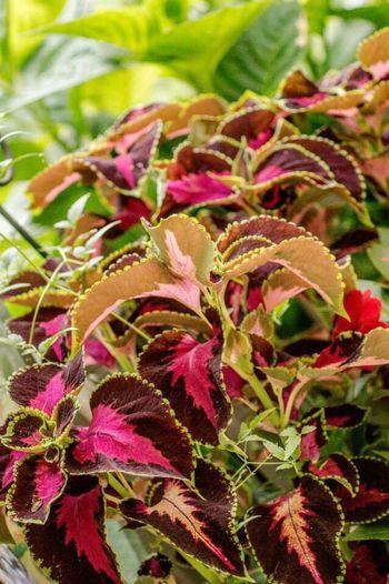 Garden Plants Colors