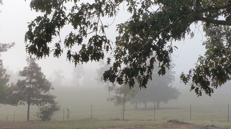Foggy morning. Fog Foggy Tree Weather Landscape Tranquility Tranquil Scene Mist Branch Field Scenics Beauty In Nature Misty Outdoors