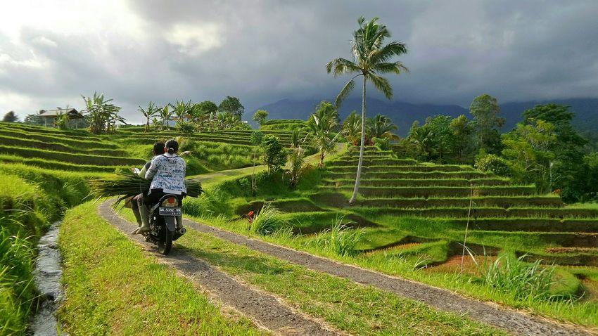 Bali - Jatiluwih Bali Jatiluwih Jeanmart Bali 16:9 Verybalitrip Very Bali Trip