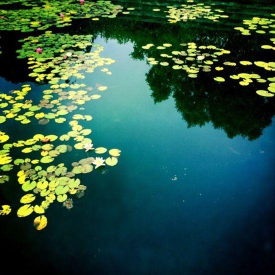 Pond Lillypads Water Springtime